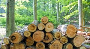 Sztuczna inteligencja do piłowania drewna. W Finlandii powstanie najnowocześniejszy tartak na świecie
