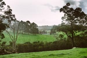 MSWiA: w 2016 r. cudzoziemcy kupili blisko 3,2 tys. ha gruntów