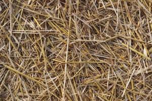 PGE nie pali się do biomasy. Co z nowym blokiem w Lublinie?