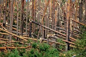 Minister Sałek: Polska włącza się w działania na rzecz ochrony klimatu