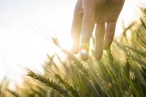 Wielka susza daje się we znaki. Co z pomocą dla rolników?