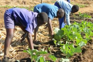 Skala tych zmian wymyka się wyobraźni. Rolnictwo Afryki u progu wielkiej rewolucji