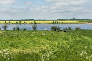 Żuławy zyskają inwestycje przeciwpowodziowe za 100 mln zł