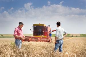Rekordowe żniwa w Rosji. Rząd wspiera eksport zboża