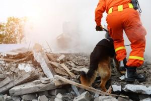 12 osób po gruzami po katastrofie budowlanej