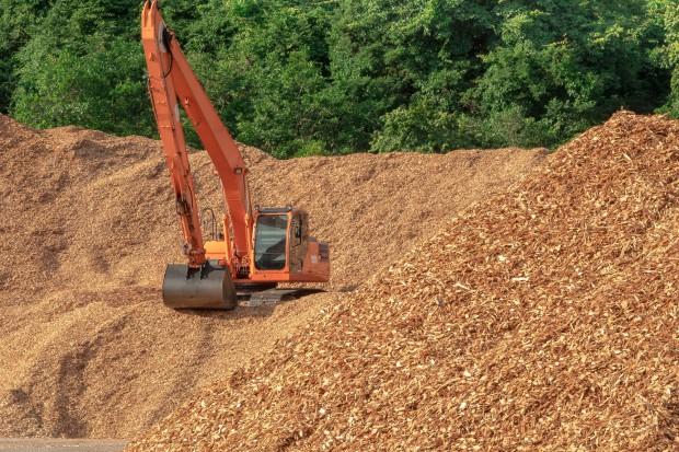 Naukowcy i NGO apelują do eurodeputowanych, by powstrzymali spalanie drzew