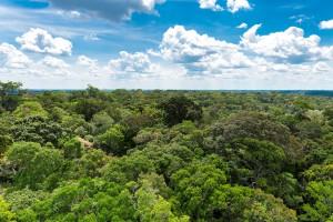 Peru zbuduje drogi w dżungli amazońskiej mimo apelu papieża Franciszka