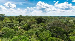 Wylesianie Amazonii sprowadzi na Brazylię zakaz importu do Europy?