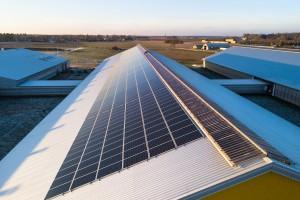 Elektrownia słoneczna na farmie mleczarskiej. Przykład do naśladowania