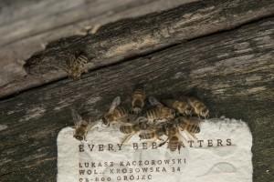Polski papier, który ratuje pszczoły
