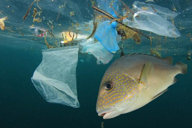 Śmieci w morzach będzie więcej niż ryb
