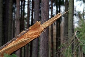 Silny wiatr przerwał dostawy prądu dla tysięcy odbiorców