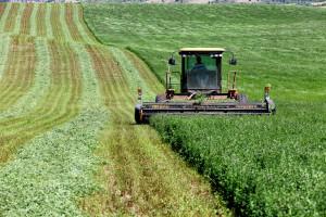 Amerykanie pomogą farmerom dotkniętym wojną celną