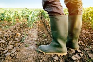 Rolnik zadłużony średnio na 50 tys. zł - najczęściej przez suszę