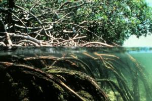 Apple zamierza zainwestować w kolumbijskie lasy