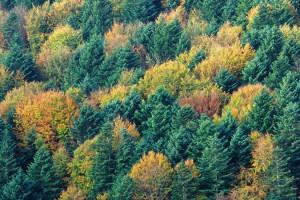 PGE posadziła 95 tysięcy drzew
