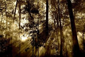 Do końca lutego potrwa wycinka lasu w związku z przekopem przez Mierzeję Wiślaną
