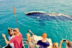 We włoskiej Ligurii mają nowy zawód - wypatrywacza waleni