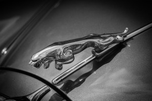 Importer jaguarów i land rowerów z dodatkowym czasem na polskim rynku