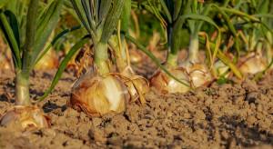 Nawozy fosforowe szkodzą roślinom?