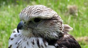 Orlen przekazał do muzeum lęg bardzo rzadkiego ptaka