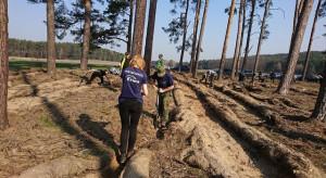 Ekologiczna współpraca Enei i Lasów Państwowych