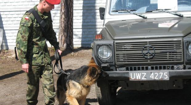 Psy od dawna służą w wojsku, fot. WK