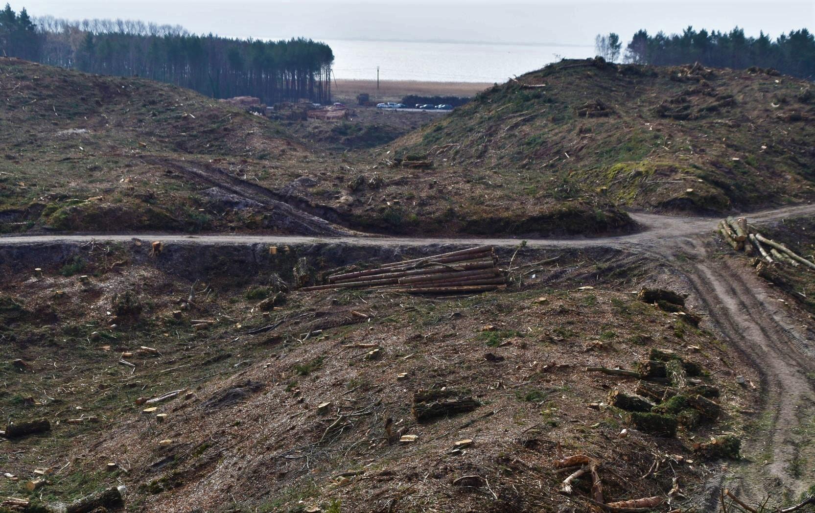 Teren pod przyszły plac budowy przekopu wykarczowano już w lutym 2019 r. fot. UM w Gdyni.