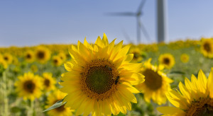 Zobacz wyniki badań wpływu farm wiatrowych na pszczoły