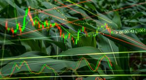 Na Towarowej Giełdzie Energii ruszy pilotaż giełdy produktów rolnych