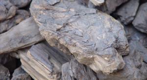 Węgiel brunatny jest pomocny w zwalczaniu groźnych wirusów