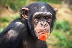 Sztuczna inteligencja rozpoznaje osobniki wśród zwierząt