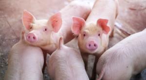 Mieszkanie z widokiem na hodowlę świń lub kurzą fermę? Nowe przepisy wchodzą w życie