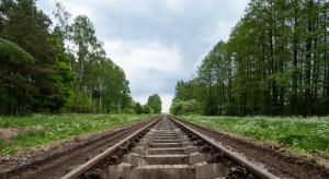 Drzewa bliższe kolejom – nie trzeba ich już wycinać