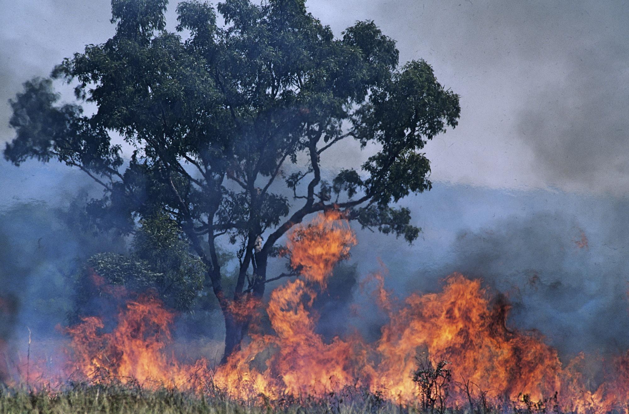 Fala upałów przekraczających 40 stopni Celsjusza spowodowała w Australii niszczące pożary buszu. Fot. Shutterstock