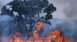 Australia: dwie osoby zginęły w pożarach, tysiące są uwięzione na plażach