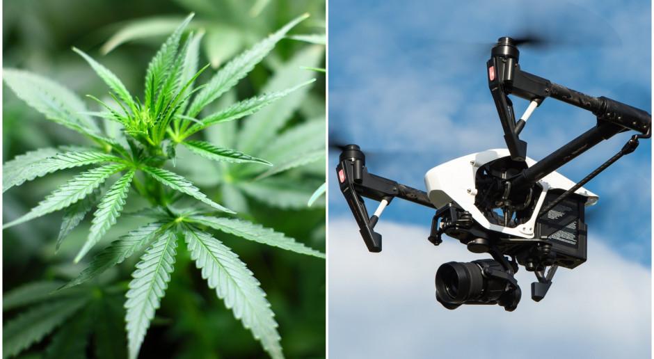 Dostarczą dronem marihuanę. Legalnie