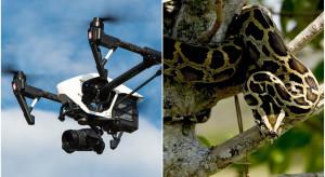 Floryda chce dronami zwalczać pytony
