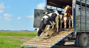 """Nowy podatek od mięsa. Europosłanka proponuje, żeby poszedł na """"zamykanie kopalń"""""""