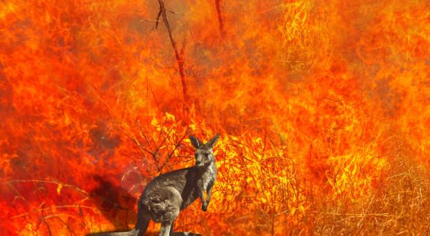 #TydzieńwAzji. Czy klęski naturalne skłonią Australię do zmiany polityki klimatycznej?